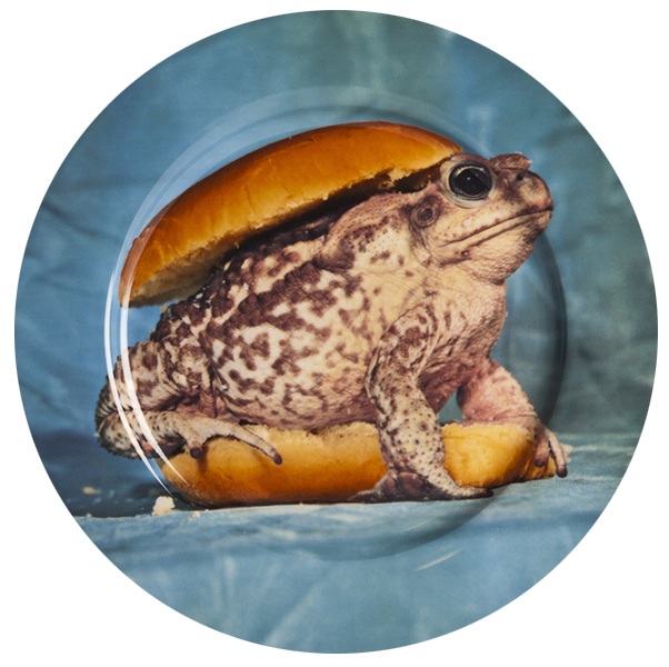 Porcelain Plate Frog  sc 1 th 224 & SELETTI WEARS TOILET PAPER